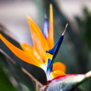 Im wunderschönen, subtropischen Garten der Anlage finden Sie Ruhe und Entspannung
